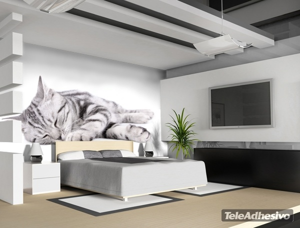Wall Murals: Sleeping cat