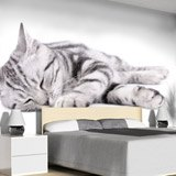Wall Murals: Sleeping cat 2