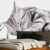 Wall Murals: Sleeping cat 4
