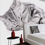 Wall Murals: Sleeping cat 5