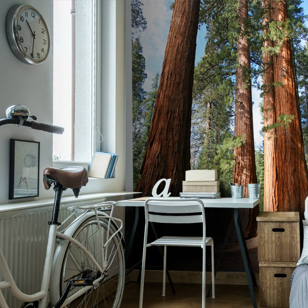 Wall Murals: Sequoia Forest