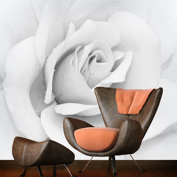 Wall Murals: Iceberg Rose