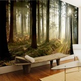 Wall Murals: Mysterious forest 2