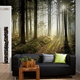 Wall Murals: Mysterious forest 3