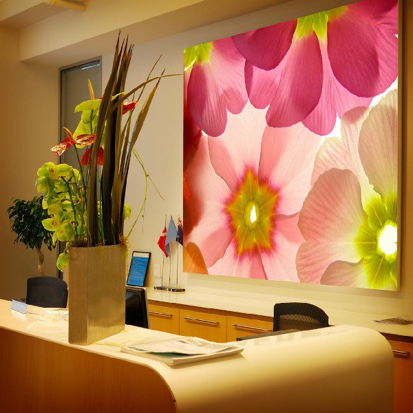 Wall Murals: Flowers light colors