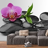 Wall Murals: Orchid with stones 3