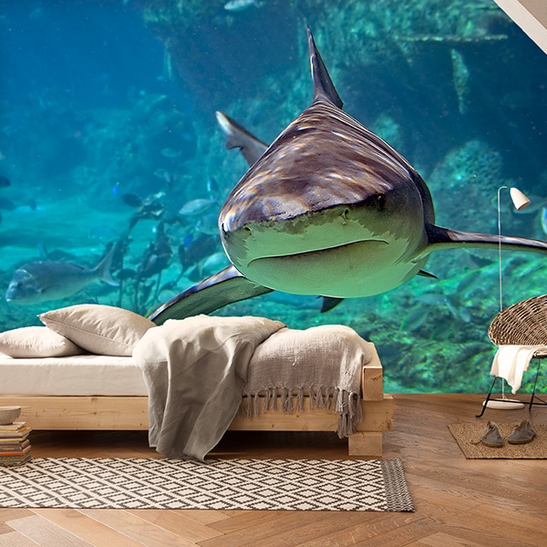 Wall Murals: Shark