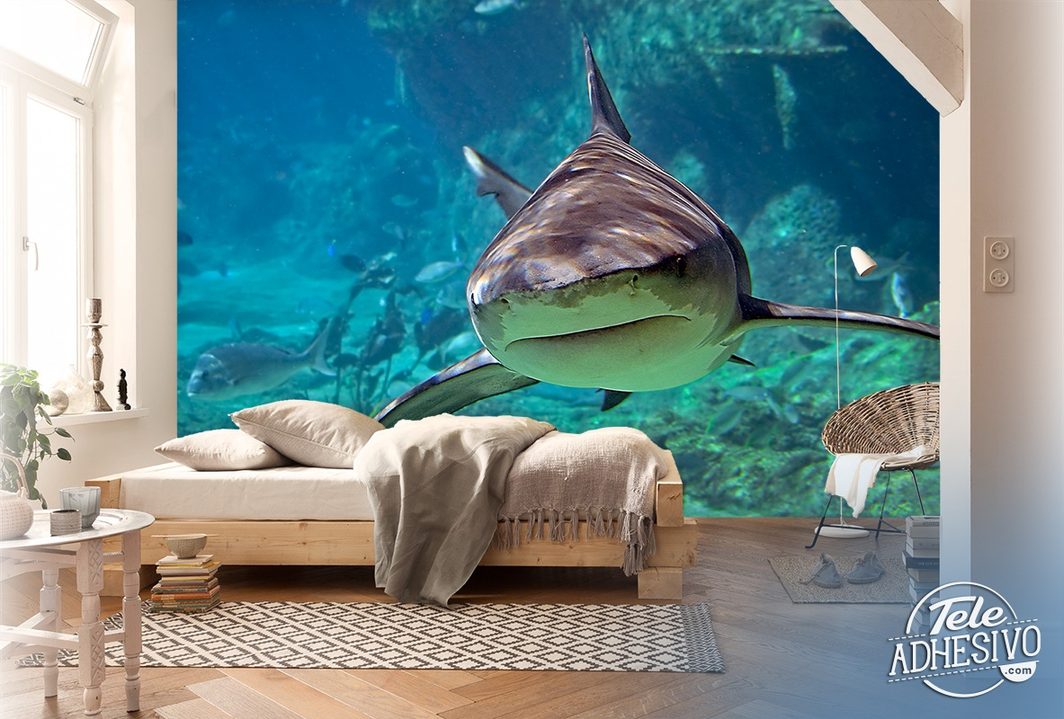 Wall Stickers And Murals The Shark