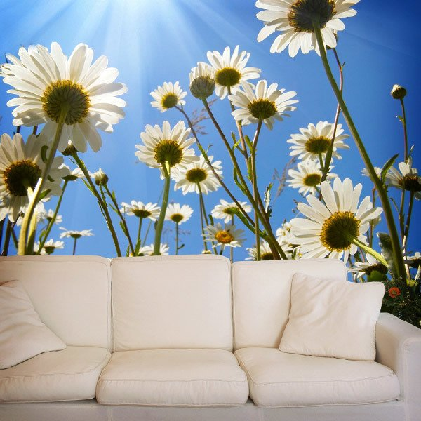 Wall Murals: Daisies from the ground