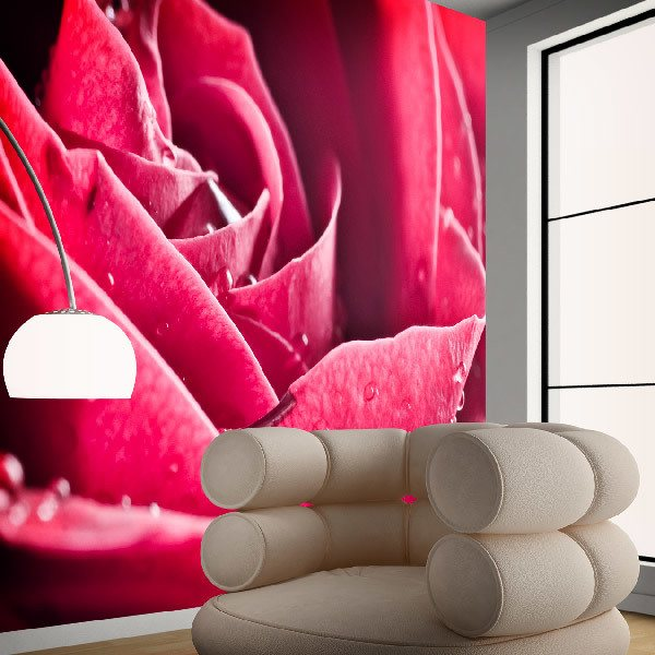 Wall Murals: Wet Petals