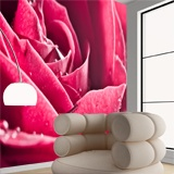 Wall Murals: Wet Petals 3