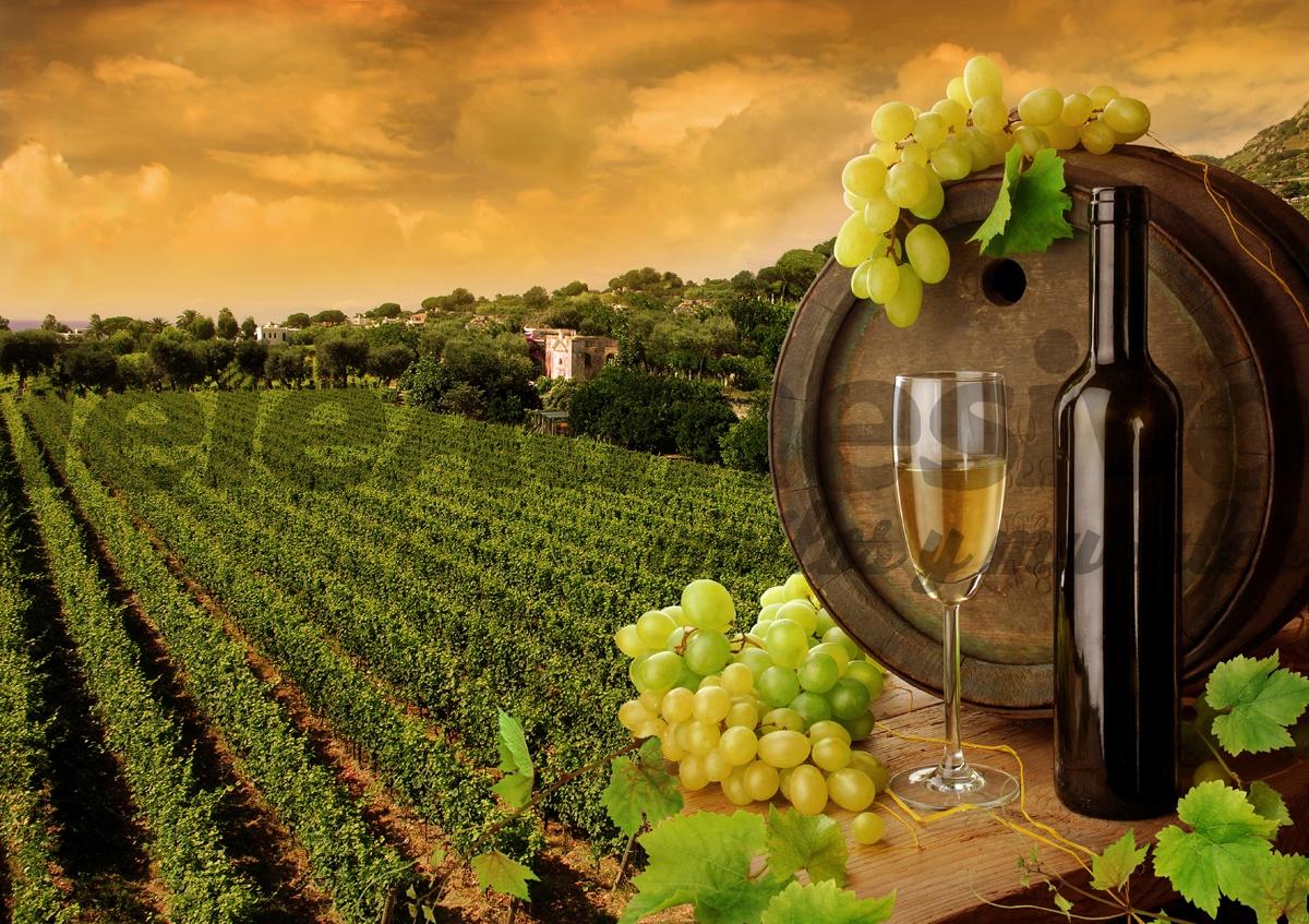Wall Murals Vineyards And Bottles