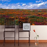 Wall Murals: Tulips fields 3