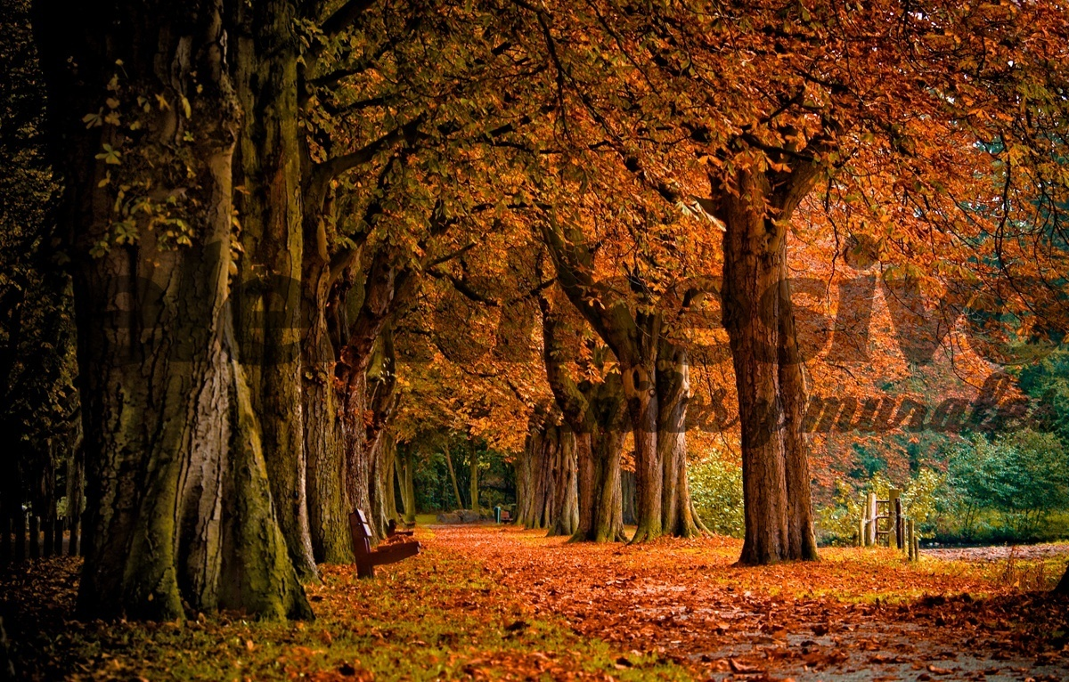 Wall murals park in autumn for Autumn tree mural