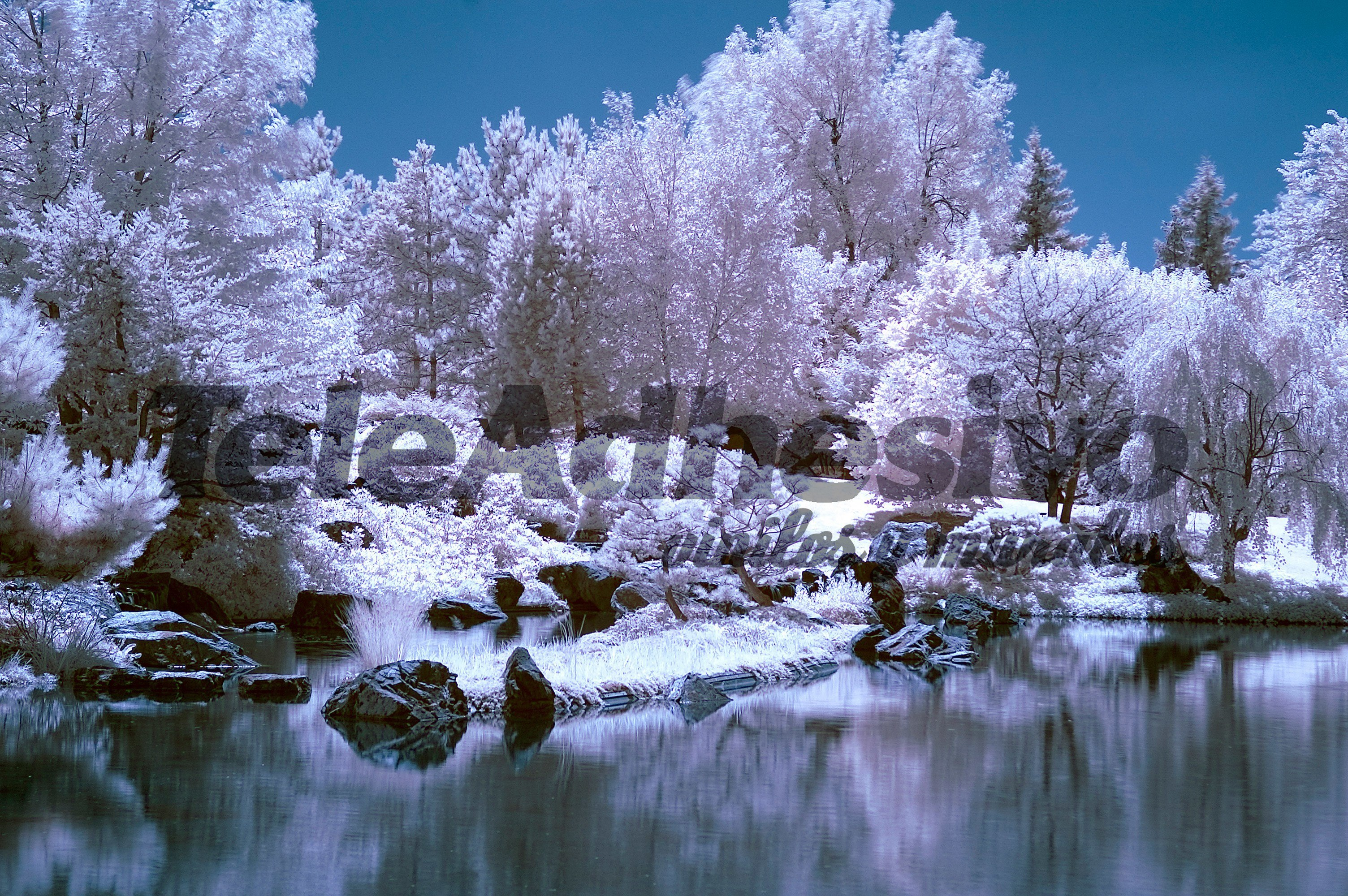Wall Murals: Forest in winter