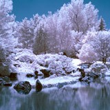 Wall Murals: Forest in winter 3