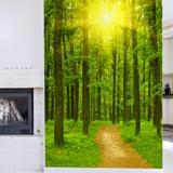 Wall Murals: Sunset in the forest 3