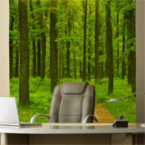 Wall Murals: Sunset in the forest 4