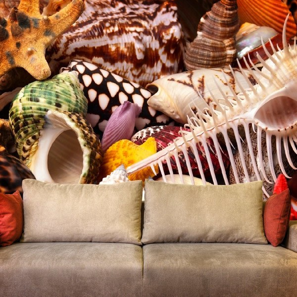 Wall Murals: Seashells