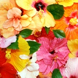 Wall Murals: Colorful flowers 2