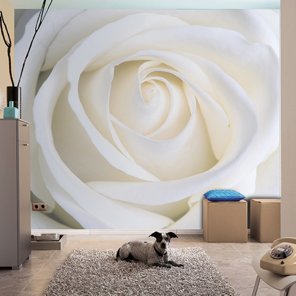 Wall Murals: White Rose