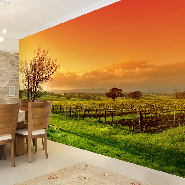 Wall Murals: Sunset at the vineyard