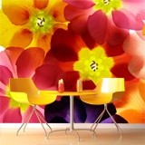 Wall Murals: Colorful Flowers 3