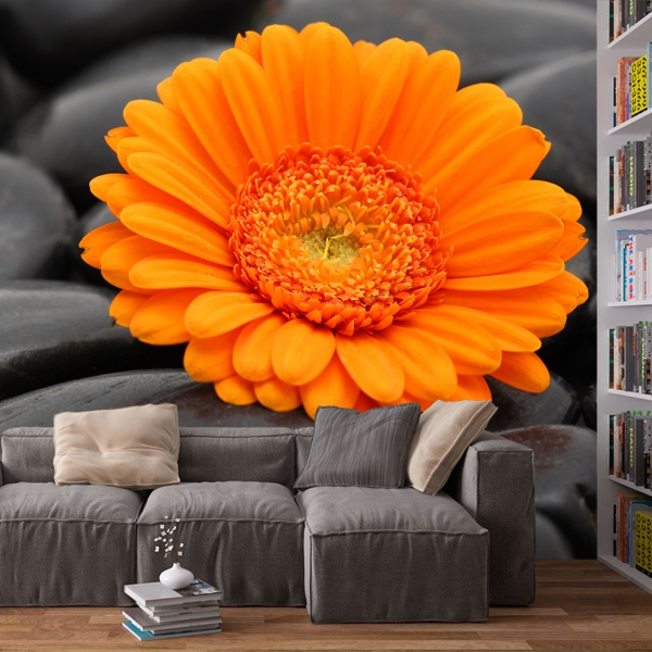 Wall Murals: Orange Gerbera 0