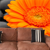 Wall Murals: Orange Gerbera 5