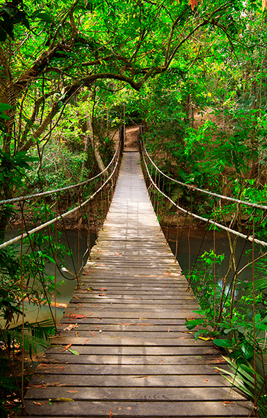 Wall Murals: Bridge in the Amazon