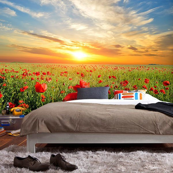 Wall Murals: Poppies at sunset 0