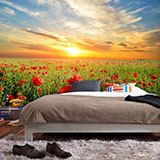 Wall Murals: Poppies at sunset 2