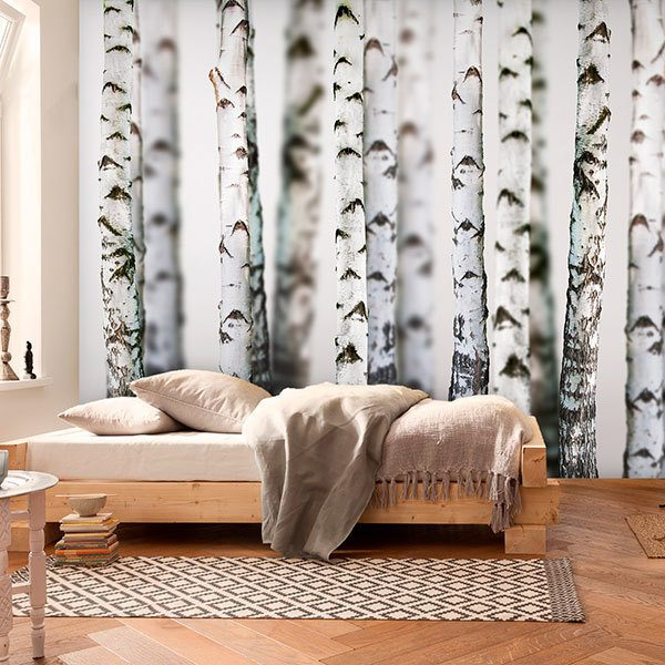 Wall Murals: Birch Forest