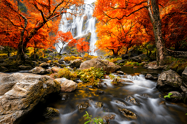 Wall Murals: Waterfall in autumn