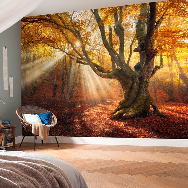 Wall Murals: Big Oak in autumn 0
