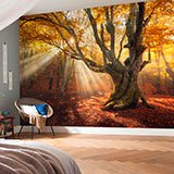 Wall Murals: Big Oak in autumn 2