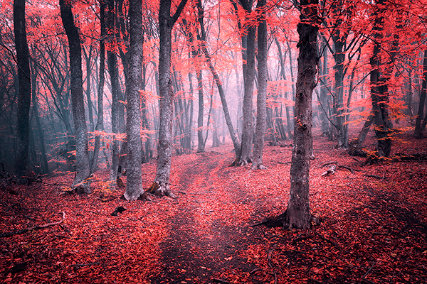 Wall Murals: The Red Forest