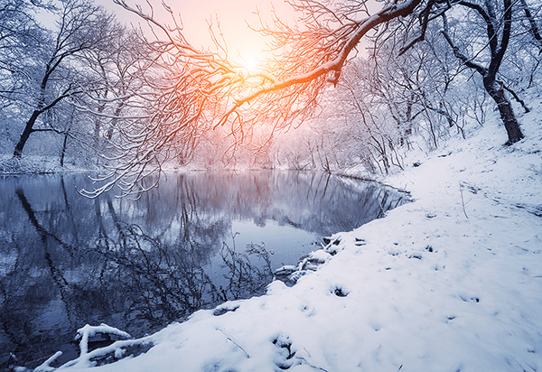 Wall Murals: Dawn in winter