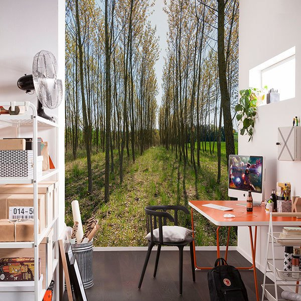 Wall Murals: Way between the poplars