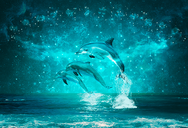 Wall Murals: Dolphins and constellations