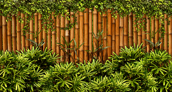 Wall Murals: Bamboo Fence