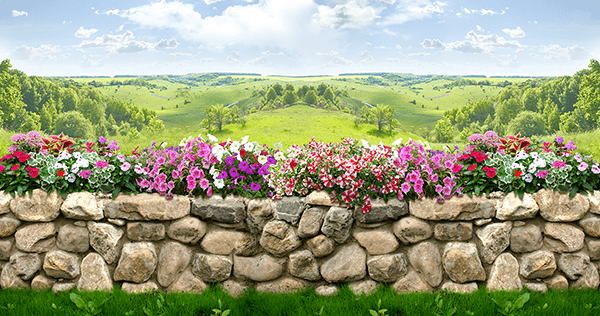 Wall Murals: The wall of flowers
