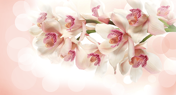 Wall Murals: Orchid Bouquet