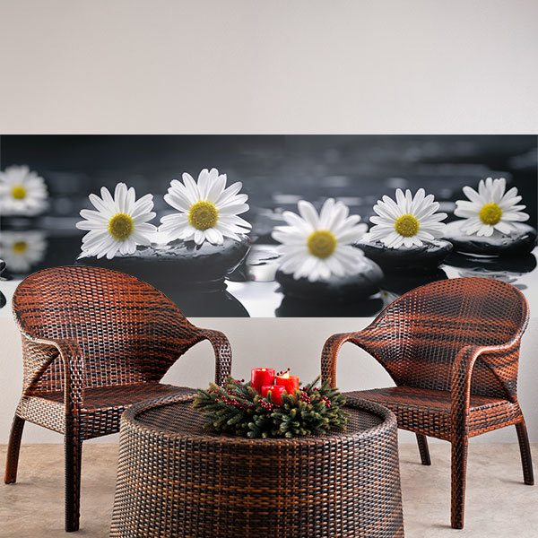 Wall Murals: Daisies on black stones