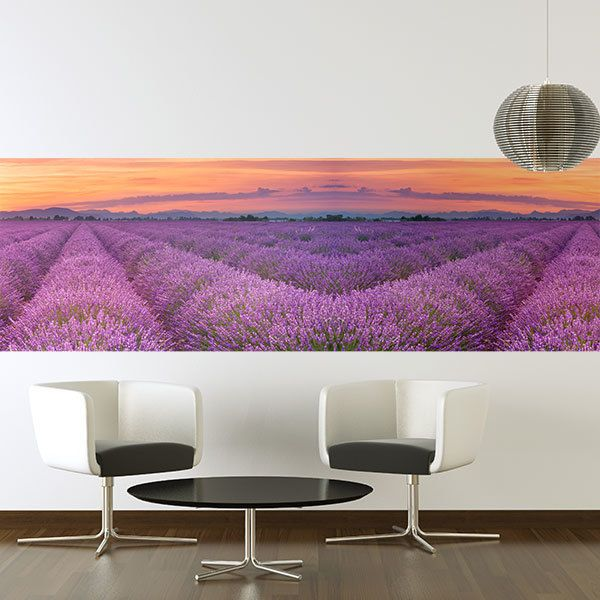 Wall Murals: Lavender field at sunset
