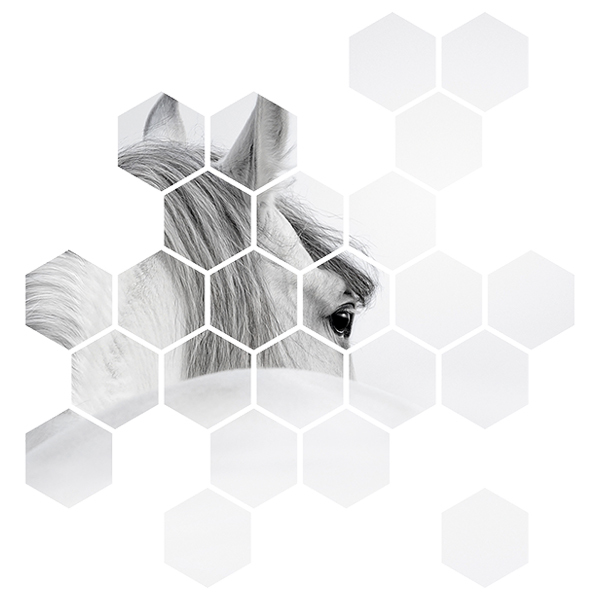Wall Stickers: White horse Geometric kit