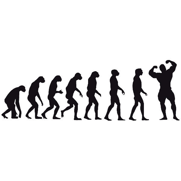 wall stickers evolution muscle, Muscles