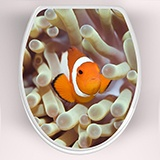 Wall Stickers: Top WC clownfish  3