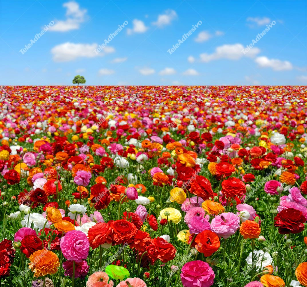 Wall Murals: Field of flowers
