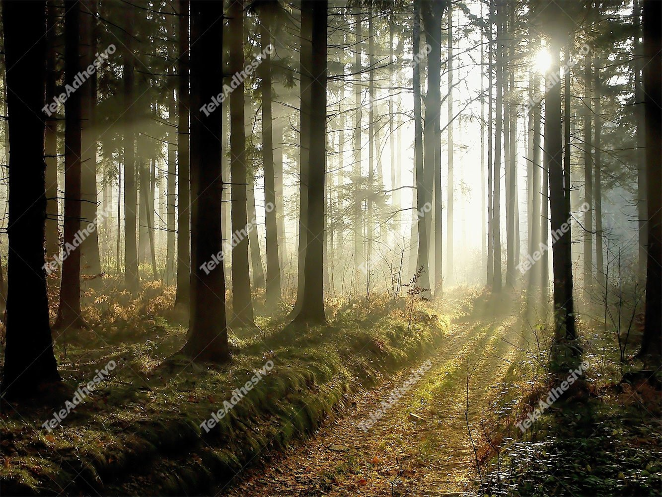 Wall Murals: Mysterious forest